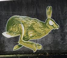 Hare // Kopervik